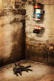 leaky basement walls repair in new jersey and pennsylvania damp